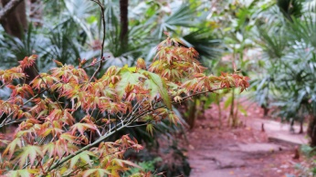 small-acer-by-jf-house