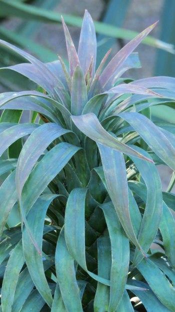 Yucca-Blue-Boy-02-04-16-BLJ