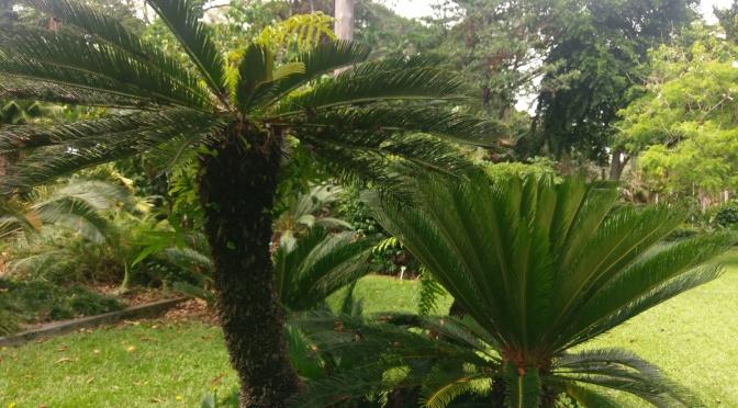 Foster's Botanic Garden